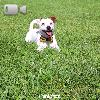 Video Caratteristiche razza Jack Russel Terrier